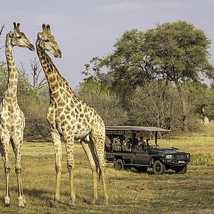 Die schönsten Familien-Safaris