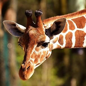Deutschlands Zoo-Ranking: Leipzig erster, Lünebach letzter