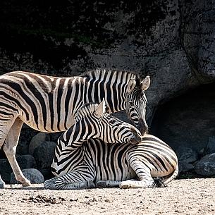 Wo ist der Zoobesuch besonders preiswert?
