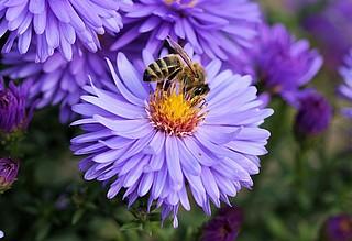 Wir tun was für (Wild-)Bienen!