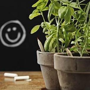 Sprout-Stifte, die zu einer Pflanze werden